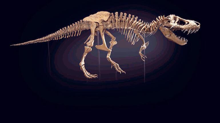 Müzayedede son nokta: T-Rex