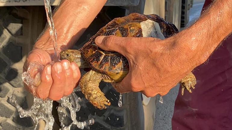 Yangında mahsur kalan kaplumbağaları böyle kurtardılar