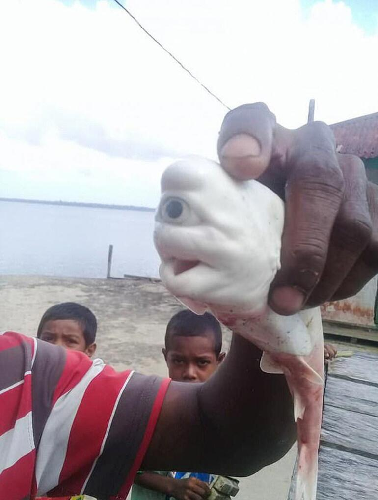 Görenler şoke oldu Tek gözlü köpek balığı...