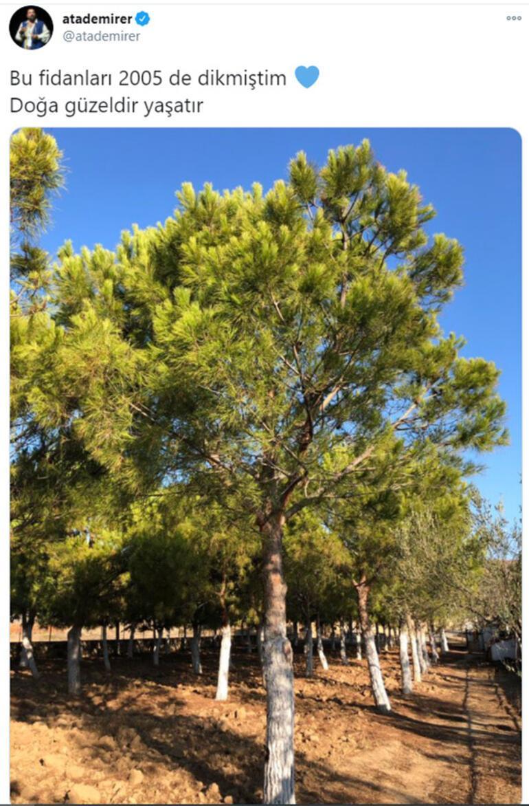 Ata Demirerin fidanları ağaç oldu