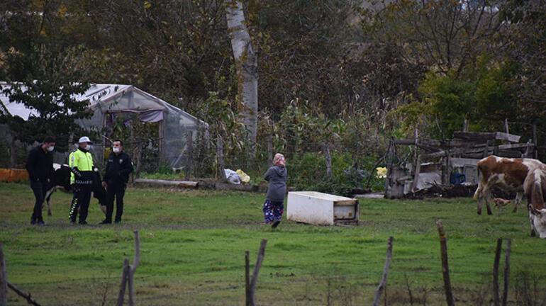 Otomobil ineğe çarptı, polisler kazaya karışan ineği aradı