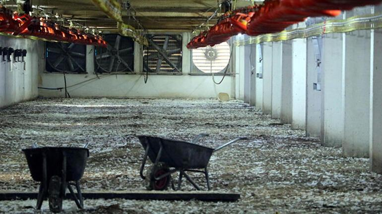 Havalandırma arızalanınca 20 bin tavuk telef oldu
