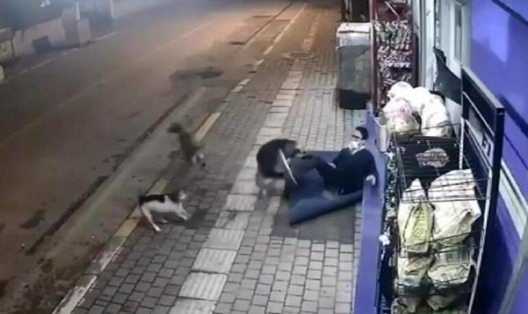 Köpek saldırısı kamerada