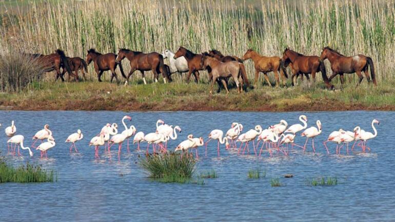 Gediz Deltası'nda UNESCO birlikteliği
