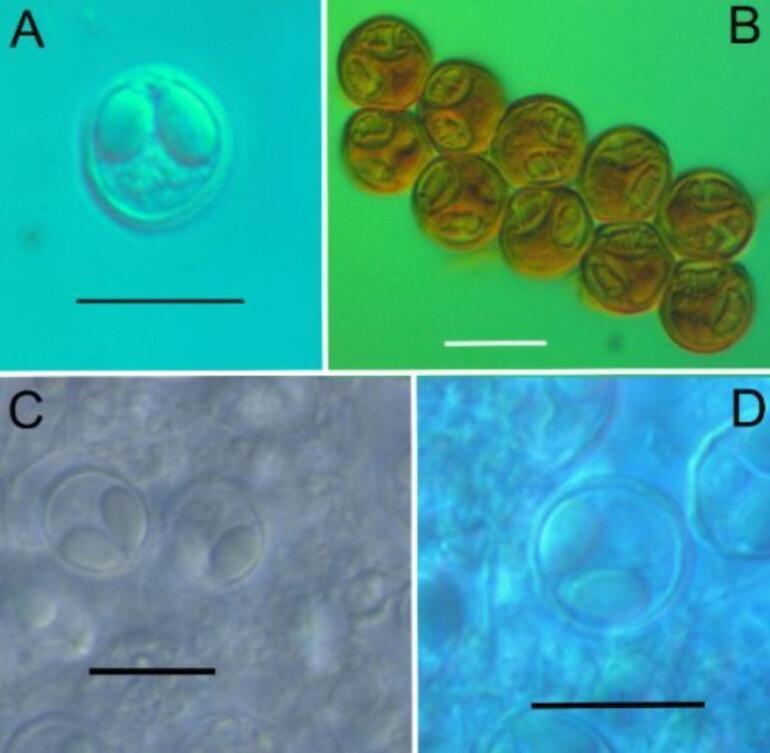 Son dakika... Türk bilim insanları keşfetti 4 yeni tür