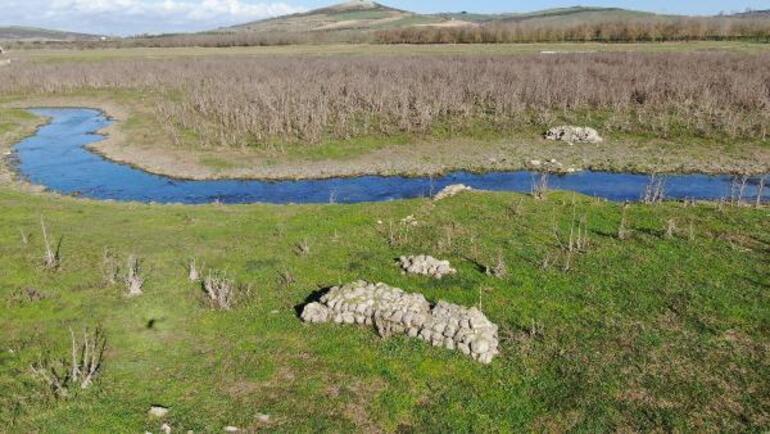 Sazlıderede sular çekildi, barajda koyunlar otlamaya başladı