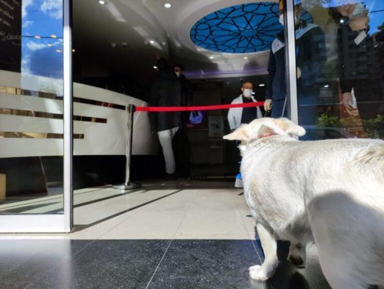 Son dakika! Sahibi tedavi gören köpek, 5 gündür hastane kapısında bekliyor  - Son Dakika Haberleri Milliyet