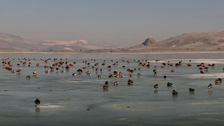 Göller Yöresindeki kuş sayısında artış gözlemlendi