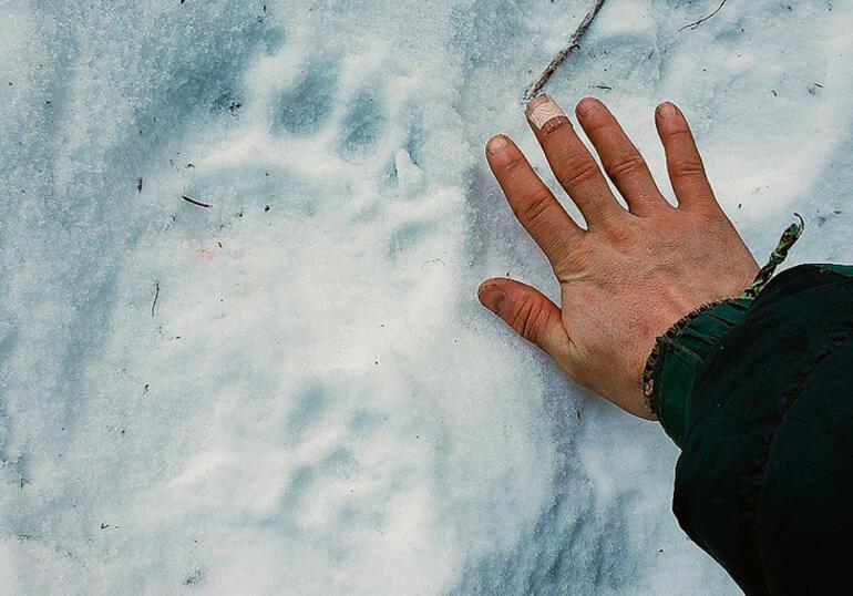 Alaskada bir kadına tuvaletteyken ayı saldırdı