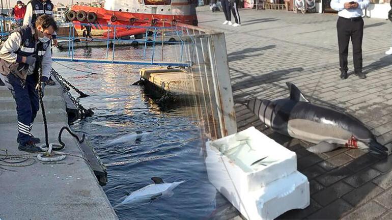 İstanbul Boğazında 1 günde 3 yunus Ölüm nedenleri açıklandı