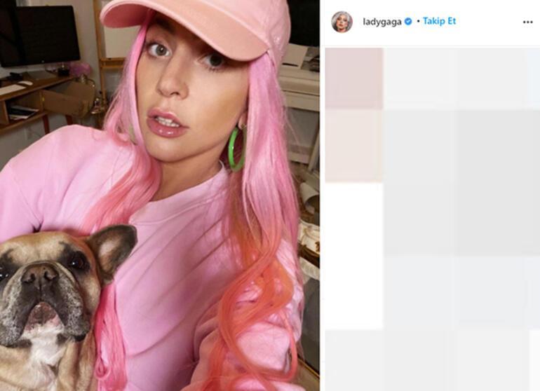 Lady Gaga köpekleri için 500 bin dolar ödül koydu