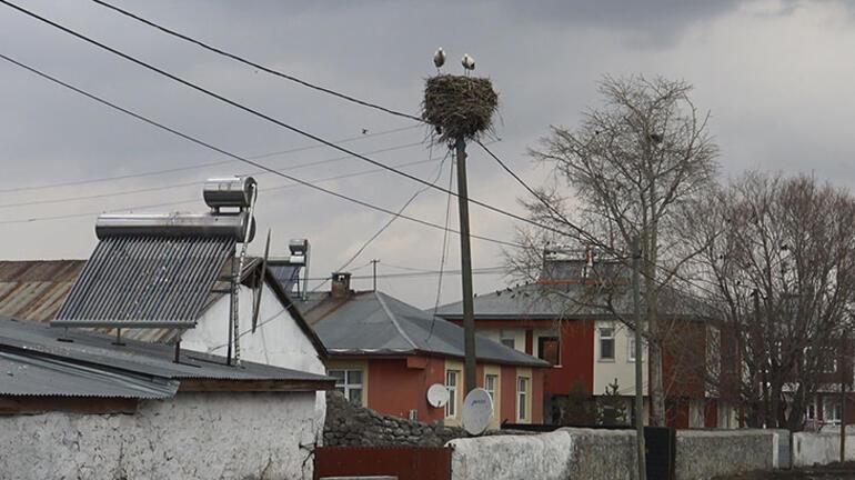 Karsta kışa rağmen göç etmeyen iki leylek köyün maskotu oldu