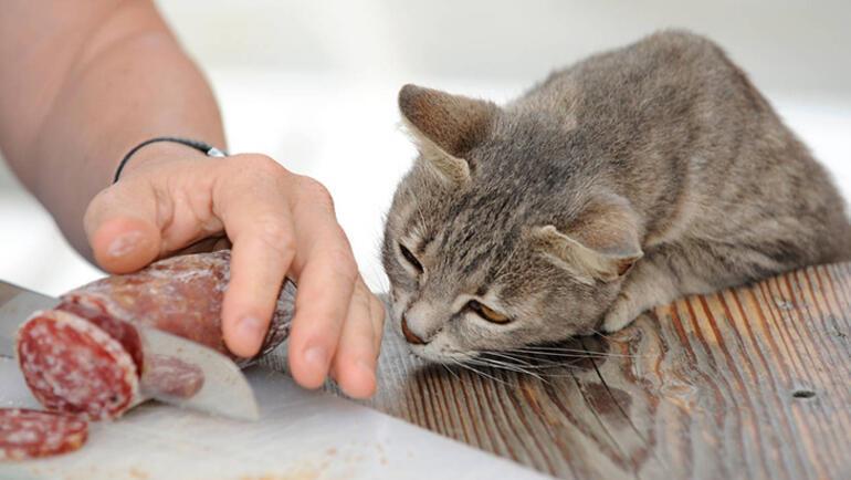 Kedi ve köpekler için tehlikeli besinler
