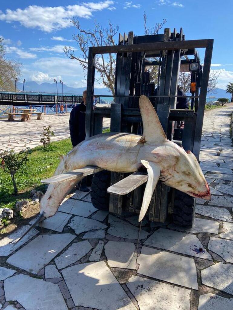 Son dakika Antalyada inanılmaz görüntü 1.5 metrelik köpek balığı kıyıya vurdu