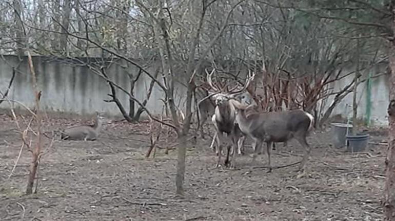 Hayvanat bahçesindeki geyiği kaçırıp yiyen 2 kişi tutuklandı