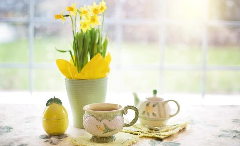 Ev dekorasyonunda bitki kullanımı Evleriniz çiçek açsın