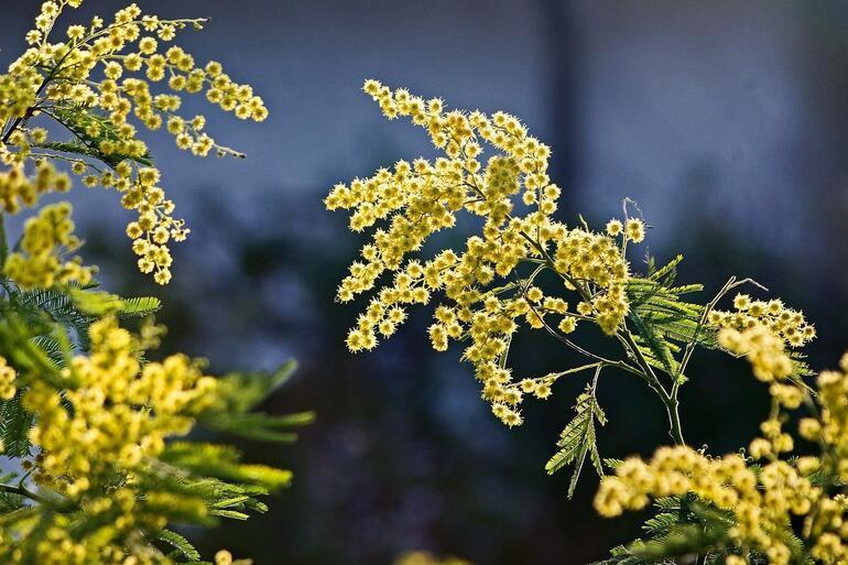 Kış Bahçelerinde Yetiştirilebilecek Bitkiler