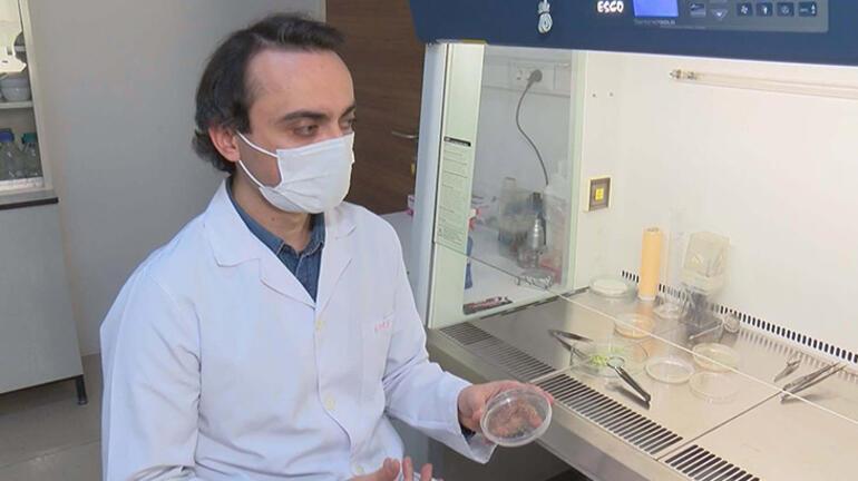 Son dakika... Türk bilim insanları ayçiçeğiyle başardı Dünyada ses getirdi
