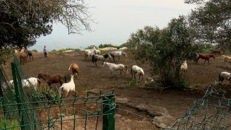 Kayıp atların akıbeti Bakamayınca 'kaçtı' ihbarı yapmışlar