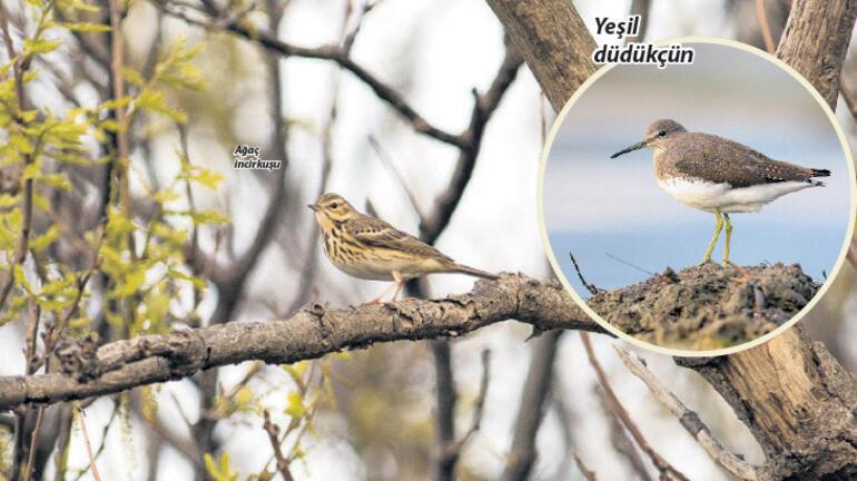 Kuş gözlemciliğine giriş