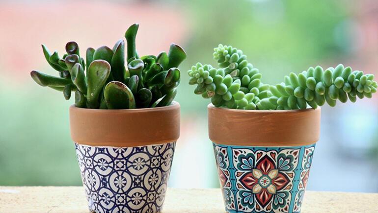 Bitkileri evimizin dekorasyon yıldızları haline nasıl getiririz