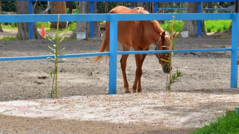 Son dakika... İBBnin Hataya gönderdiği 99 atla ilgili tüyler ürperten iddia