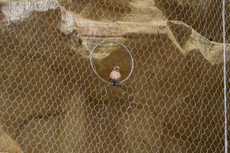 Silivride kuşları öldüren çelik ağ