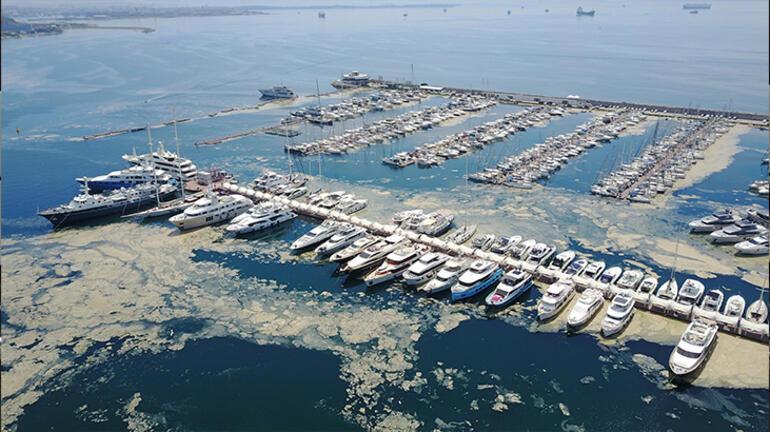 Pendik Marinayı deniz salyaları kapladı
