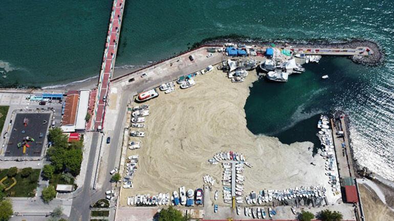 İzmit Körfezinde deniz salyası temizliği Tam 100 ton çıktı