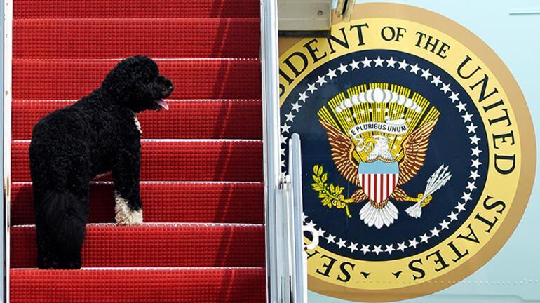 Barack Obamanın acı günü... Köpeği Bo öldü