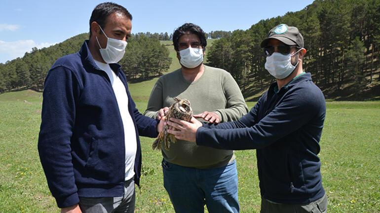 Karsta bitkin halde bulunan kulaklı orman baykuşu tedavi altına alındı