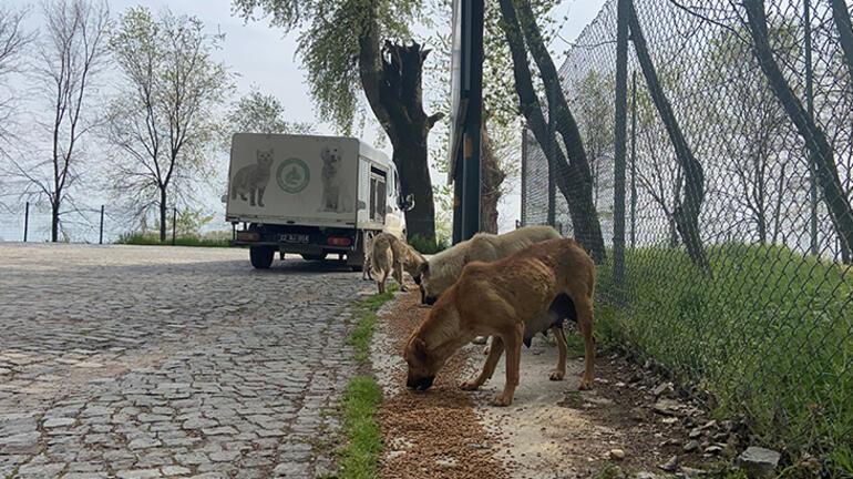 Edirnede salgın sürecinde sokağa terk edilen hayvan sayısı artıyor