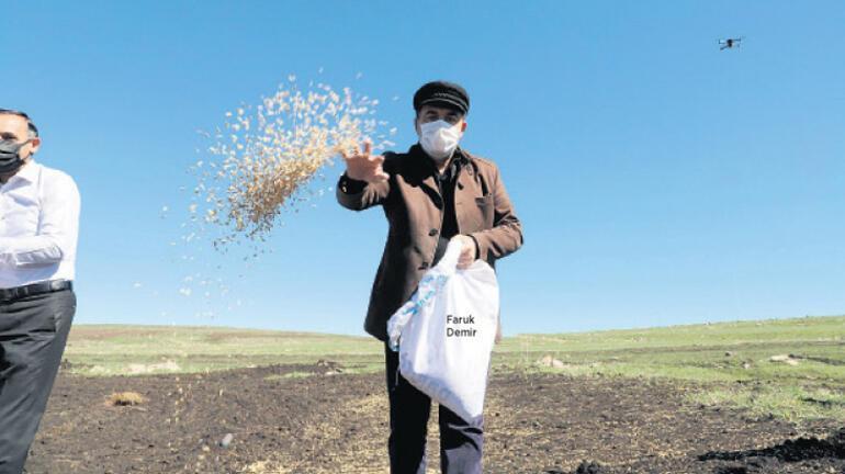 13 bin yıllık tohum toprakla buluştu