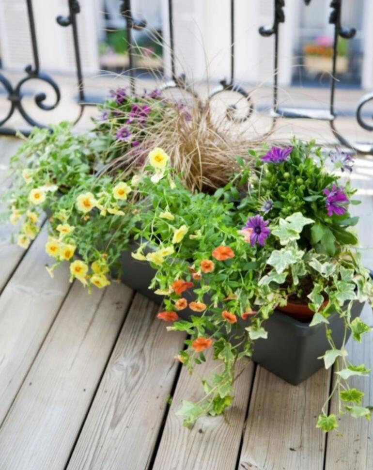 Balkonunuza çiçek ekme zamanı
