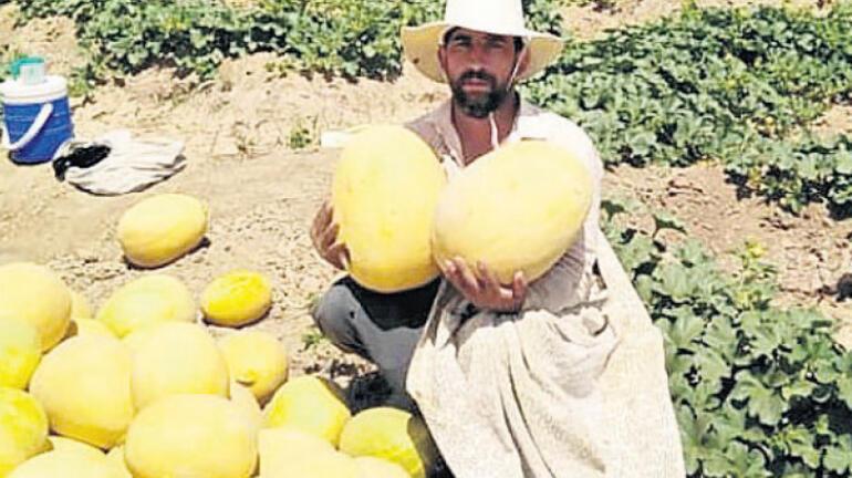 Türkiye, kavun üretiminde hibrit tohuma yöneliyor