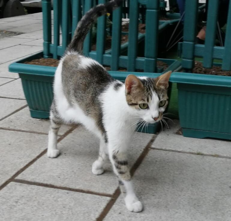 Kedileri yediğini itiraf etti Kirli geçmişi ortaya çıktı