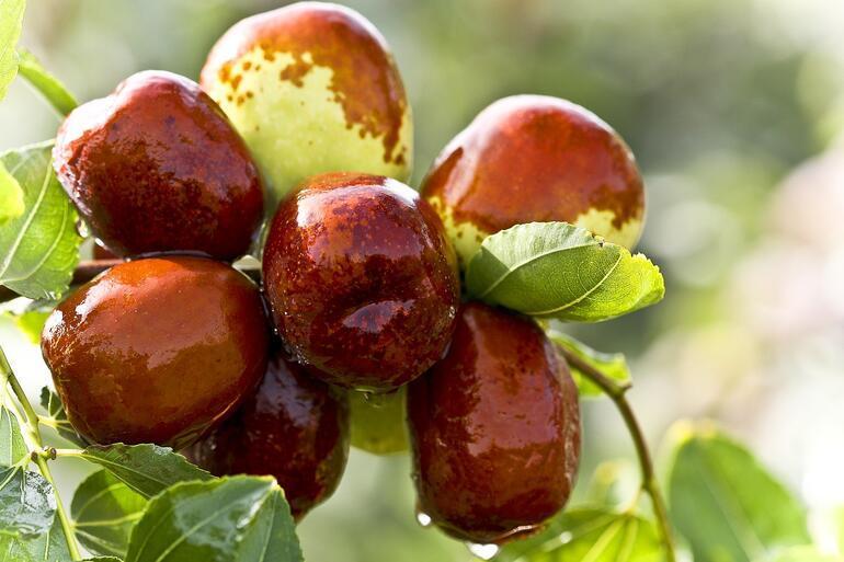 Hünnapın Faydaları Nelerdir Hünnap Meyvesi Neye İyi Gelir, Ne İşe Yarar