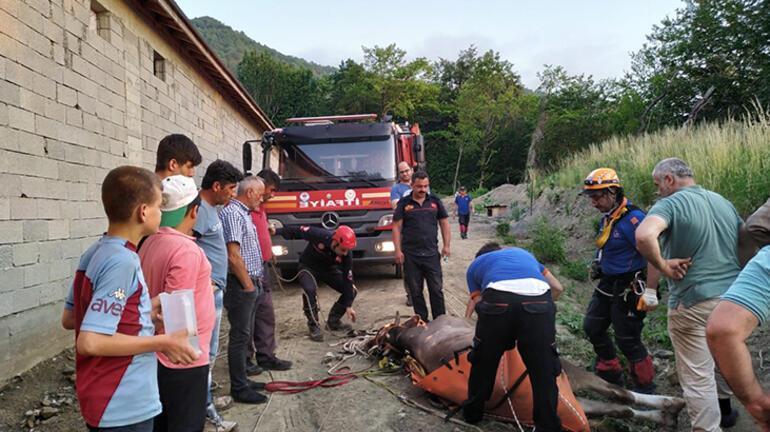 Ormanlık alanda mahsur kalan 3 inek itfaiye ekiplerince kurtarıldı