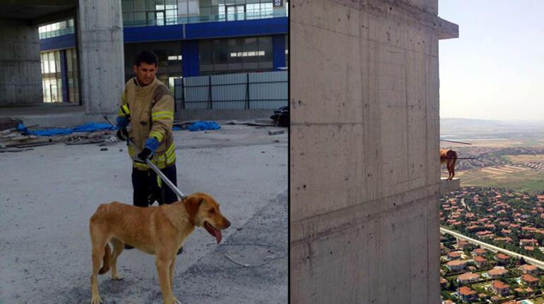 Esenyurtta 36ncı katta 10 gündür mahsur kalan köpeği itfaiye kurtardı