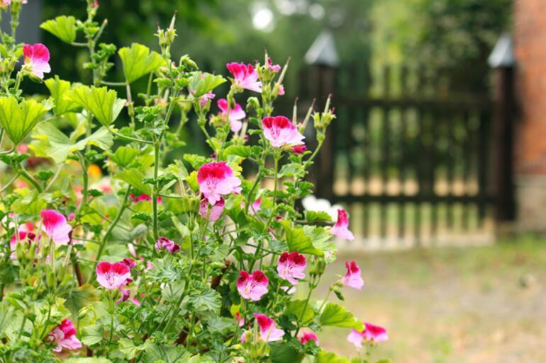 Bahçe dekorasyon fikirleri (2021)