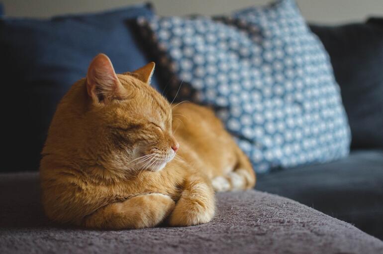 Kedi İsimleri ve Anlamları 2021: En Güzel Türkçe, Yabancı, Yaratıcı, Mitolojik Erkek ve Dişi Kedi İsimleri