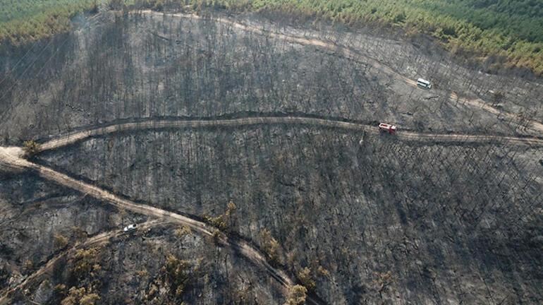 Foçadaki yangında 30 hektar ormanlık alan zarar gördü