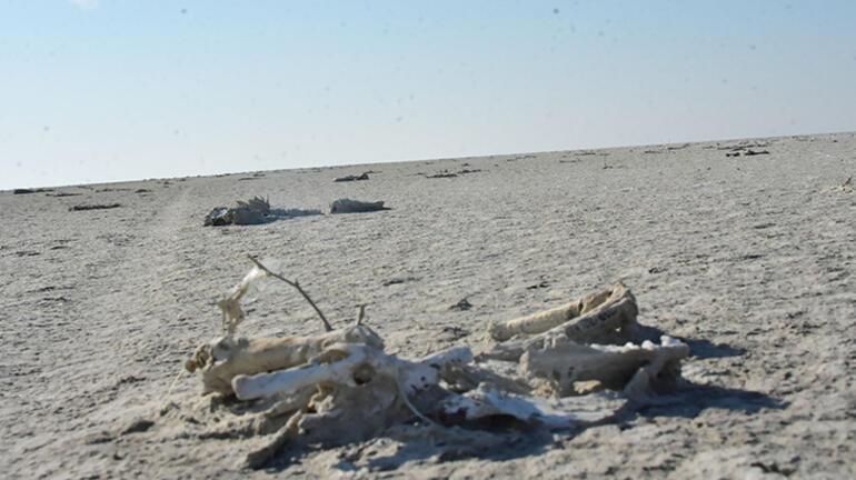 Son dakika...  Tuz Gölünde 1000 kadar flamingo öldü Bakanlar sebebini açıkladı