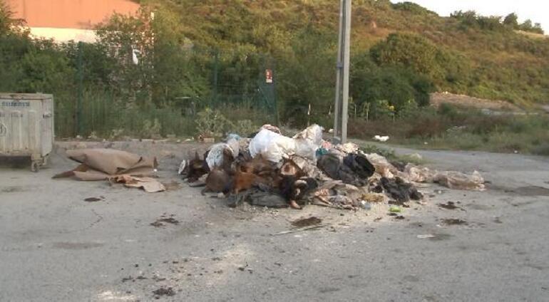 İstanbulda isyan ettiren görüntü Kurbanlık hayvanların kafalarını yola attılar
