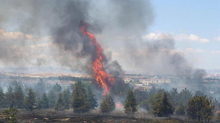 Son dakika: Atatürk Orman Çiftliğinde yangın