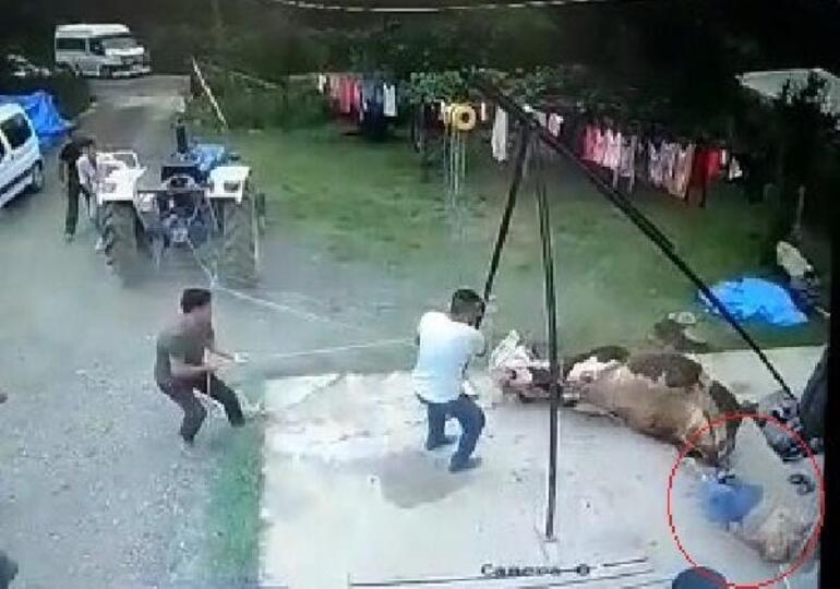 Kurbanlık boğanın saldırısında öldü, o anlar kamerada