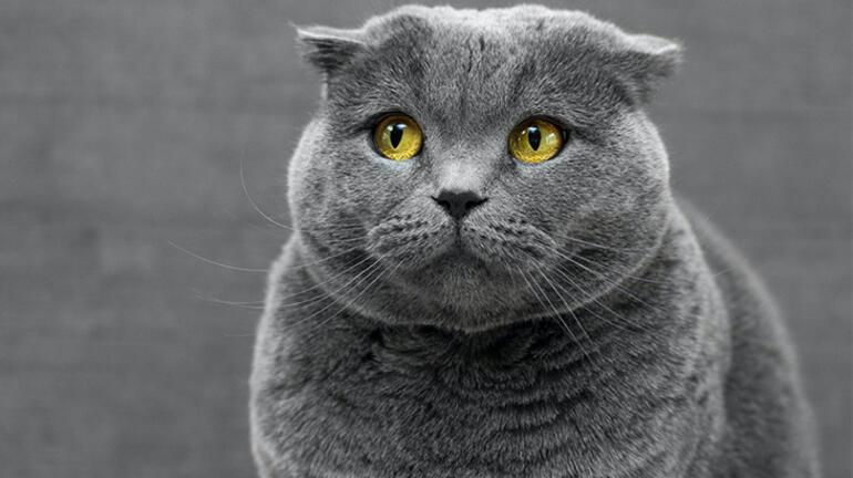 Kedinizin nasıl olduğunu size söyleyen mobil uygulama