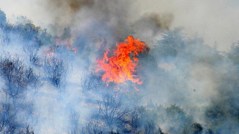 Son dakika: Peş peşe orman yangınları Acı haber geldi...