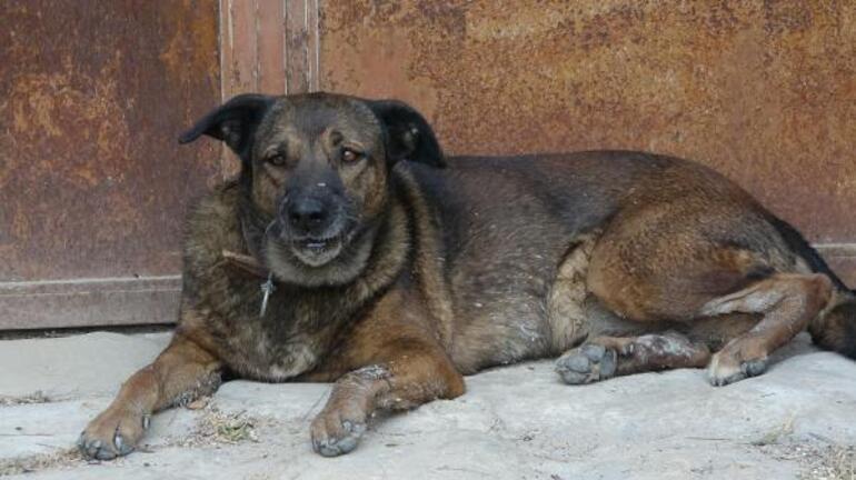 Manavgattan acı kare Ölen çiftin köpekleri evin önünden ayrılmıyor