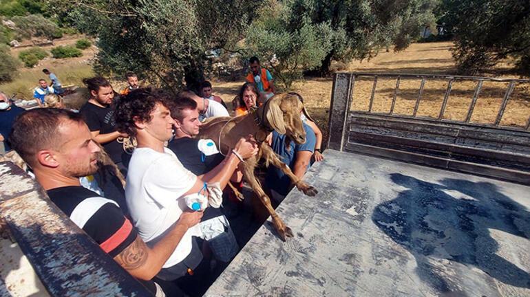 Marmaristeki yangında 35 keçi yanmaktan kurtarıldı